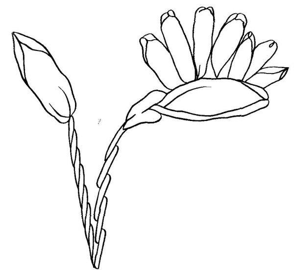 Итак, предлагаю Вашему внимаю следующую подборку схем для вышивки лентами.  С чего начинать вышивку лентами.
