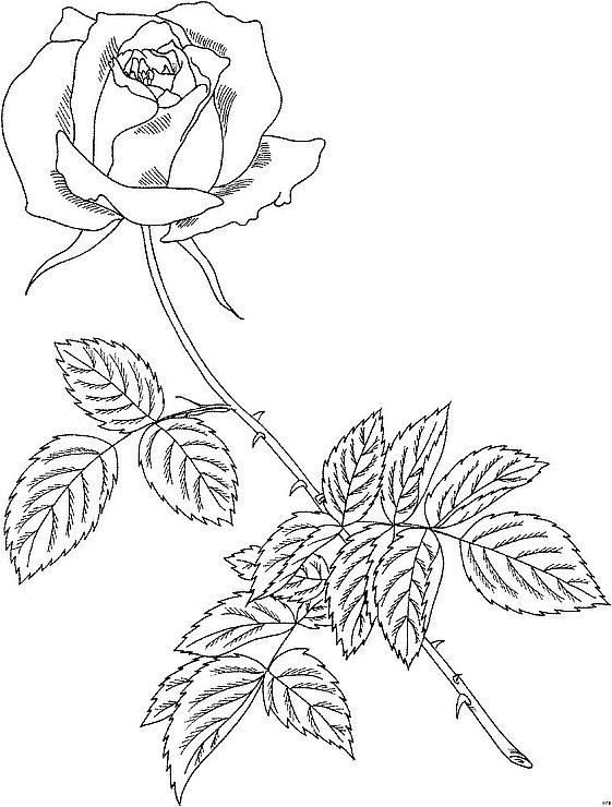 Розы вышитые лентами мастер класс видео