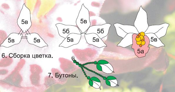 Схема цветка 6 класс 407