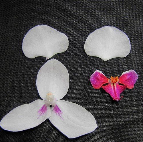 Вот части цветка настоящей орхидеи, которые мы и попытаемся воспроизвести из бисера.  Получается, что нам необходимо...