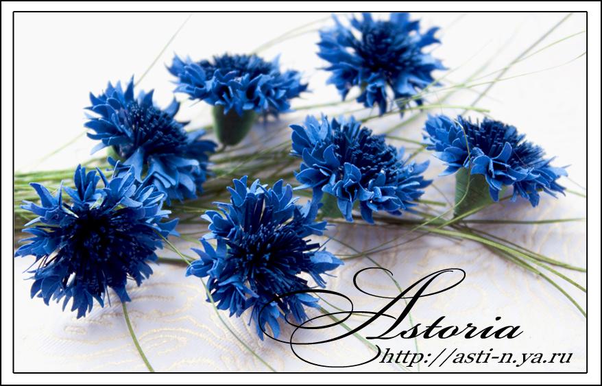 49Строение схема цветка василька