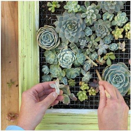 Живые картины из цветов своими руками