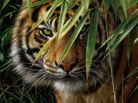 Вышивки Крестом Тигр