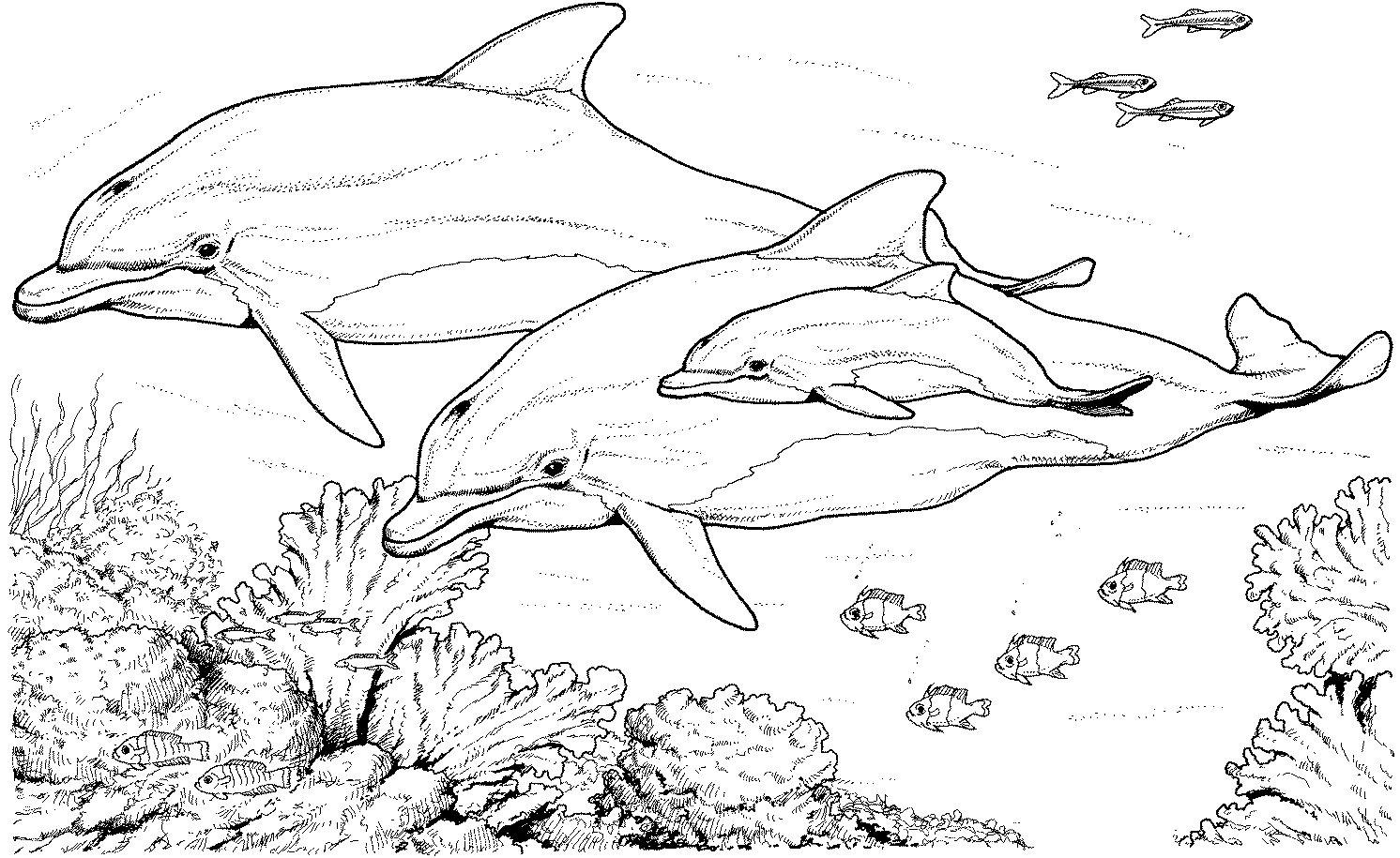 Распечатать раскраски дельфинов