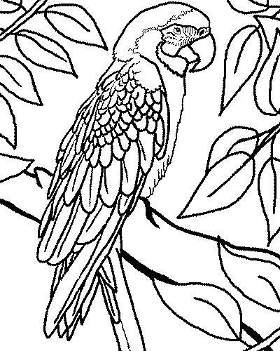 - Coloriage de perroquet ...