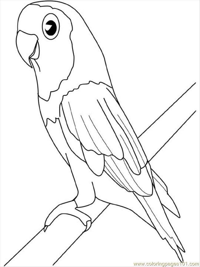 Раскраски попугай - 5