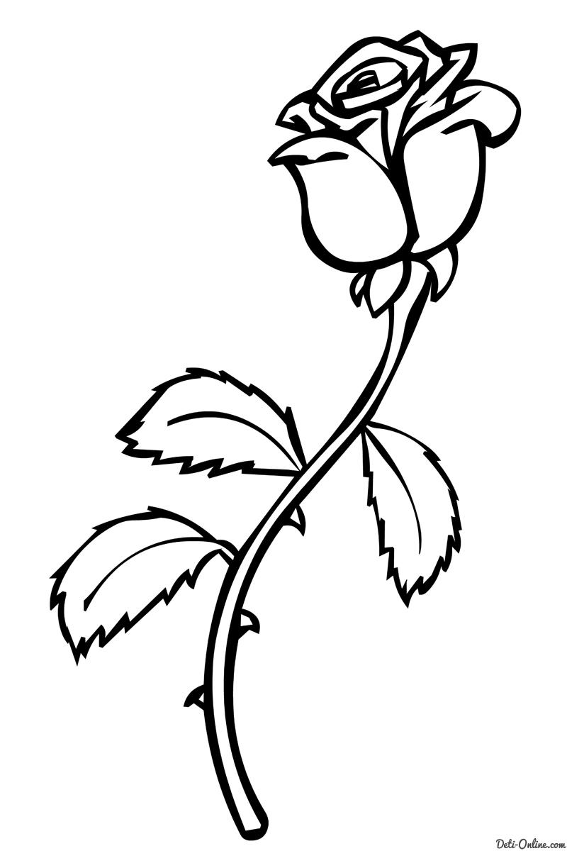 Раскраски цветы розы скачать и