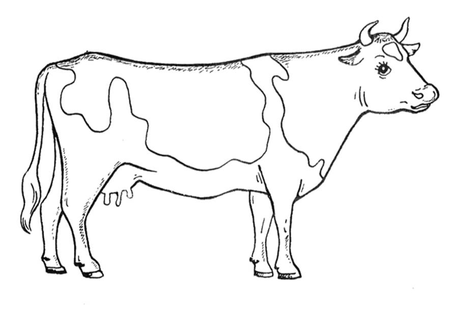 Картинка раскраска коровы для детей 36