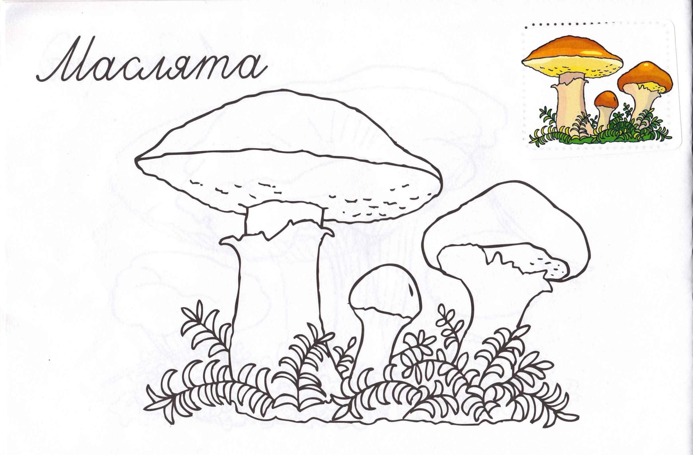 Распечатать раскраску грибы и их названия