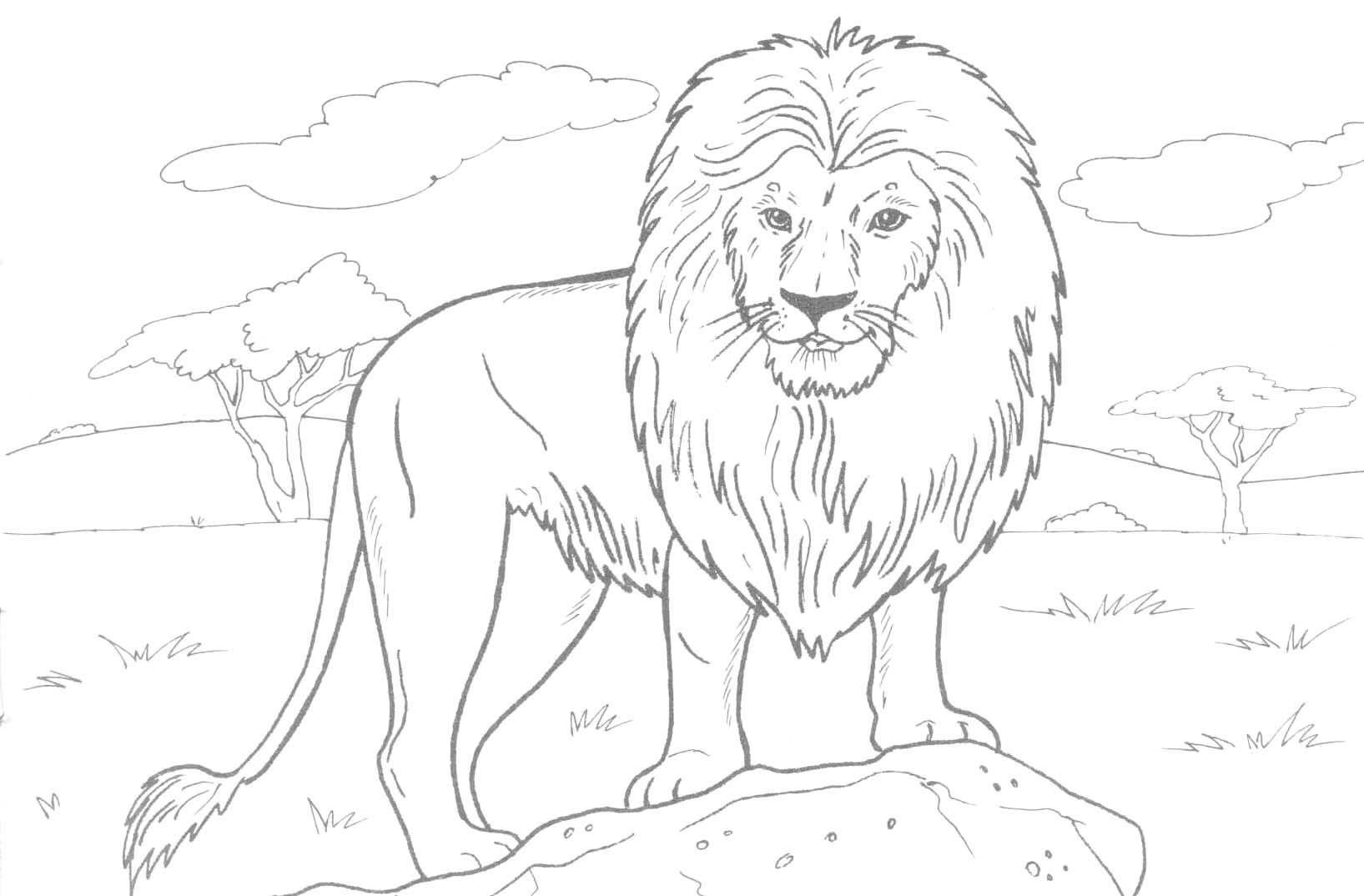 Распечатать для раскраски зверей