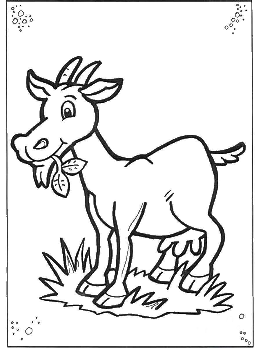 Раскраски животные севера для детей скачать бесплатно