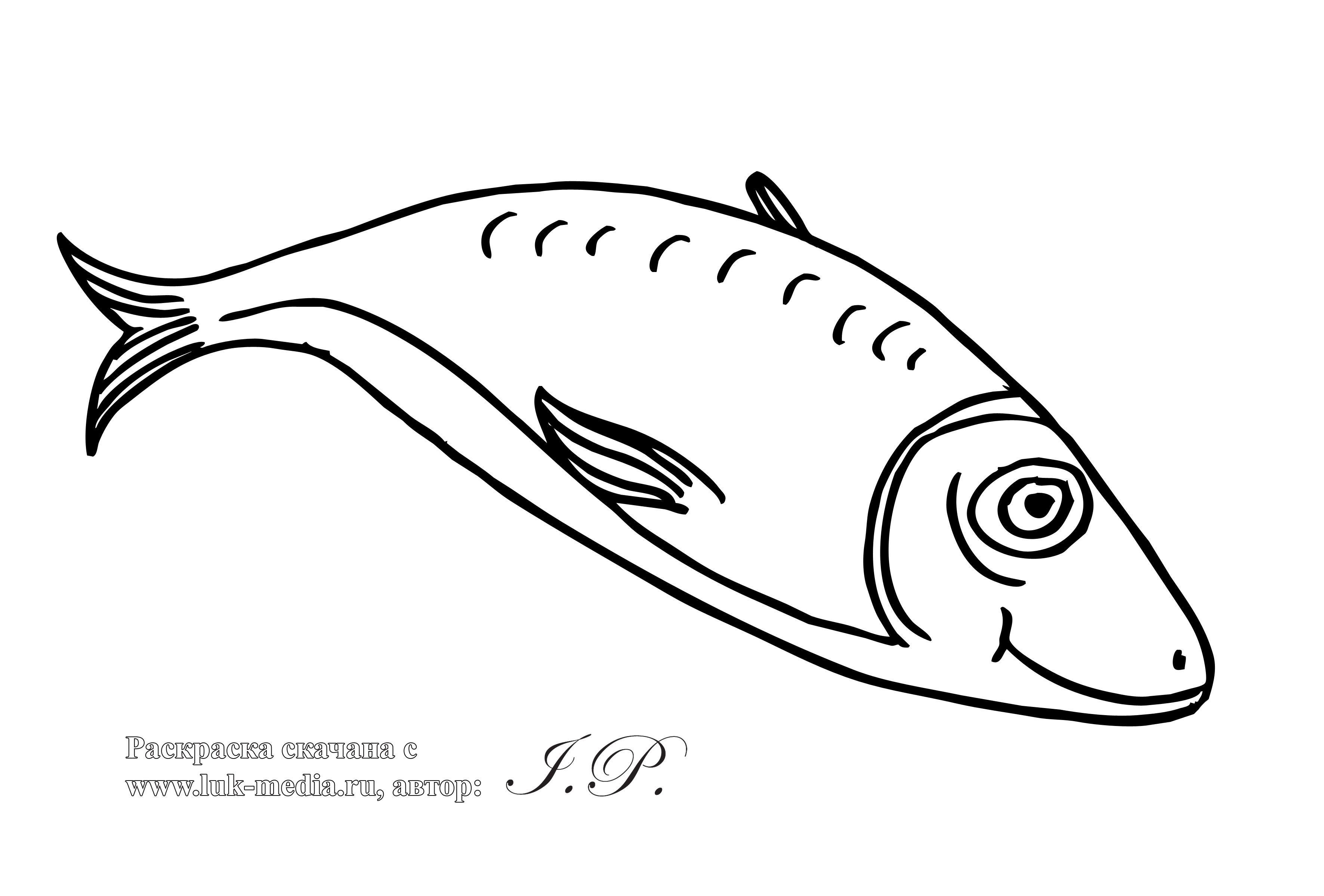 Картинка раскраски рыба