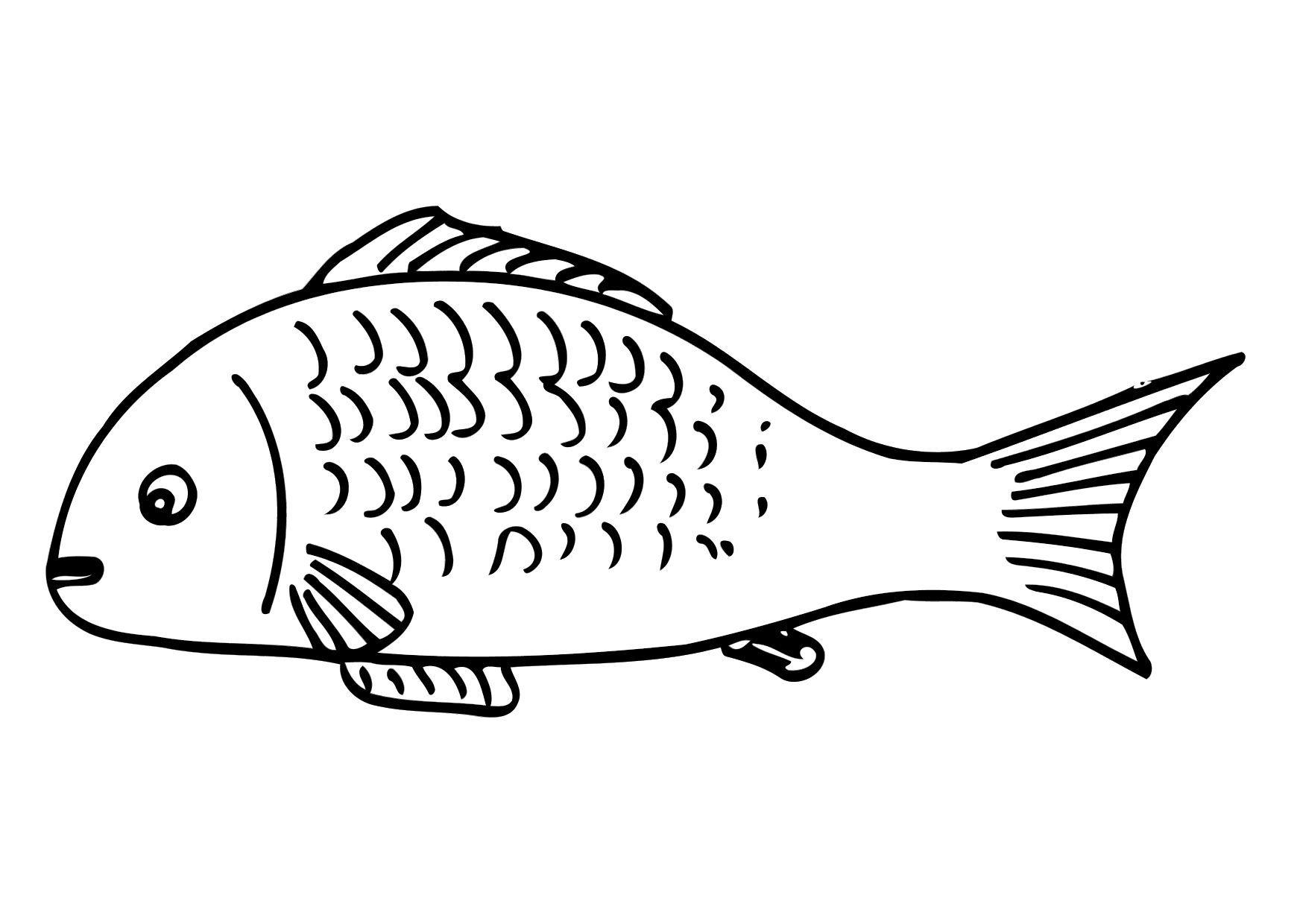 Раскраски рыбки для детей - 6