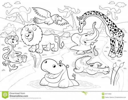 раскраски животные африки скачать и распечатать бесплатно