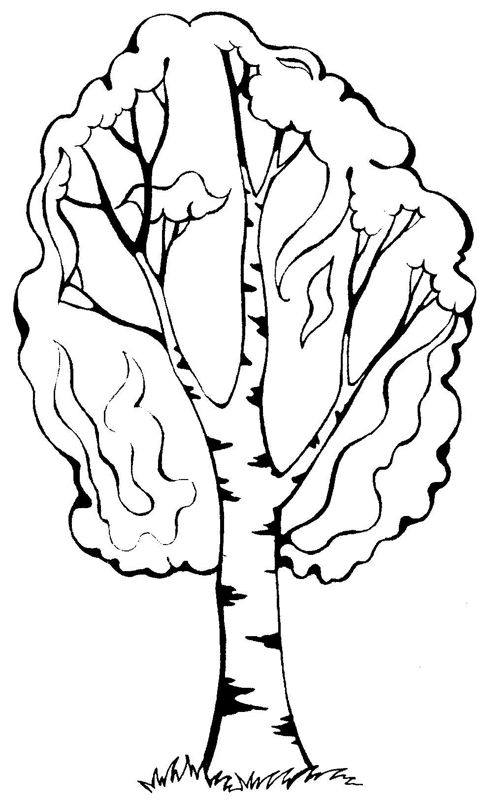 """Раскраски """"береза дерево зимой"""" скачать и распечатать ..."""