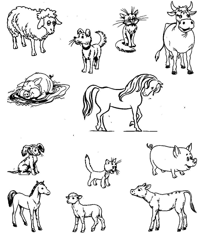 Домашние животные раскраска для детского сада