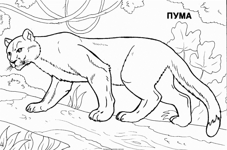 Игры про раскраски про животных