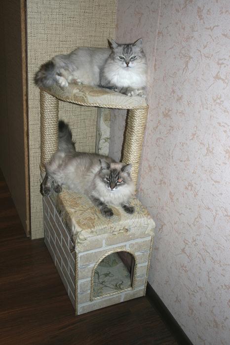 Домик для кошек своими руками мастер класс фото