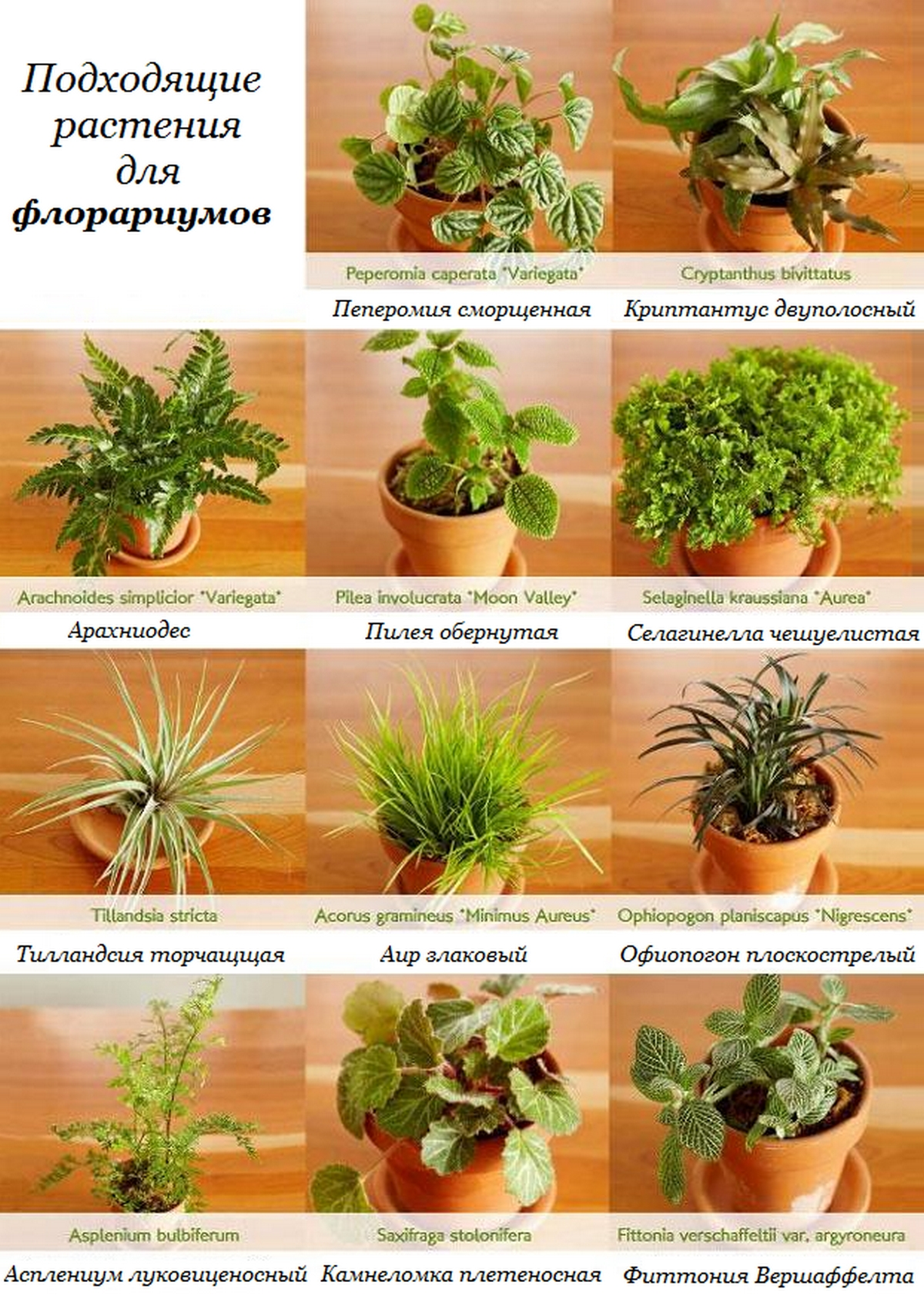 Сделать растение своими руками