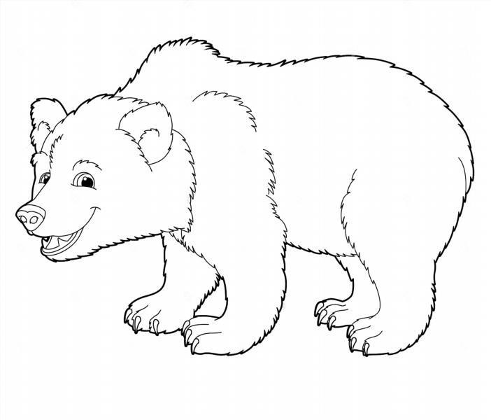 Медведь картинки раскраска