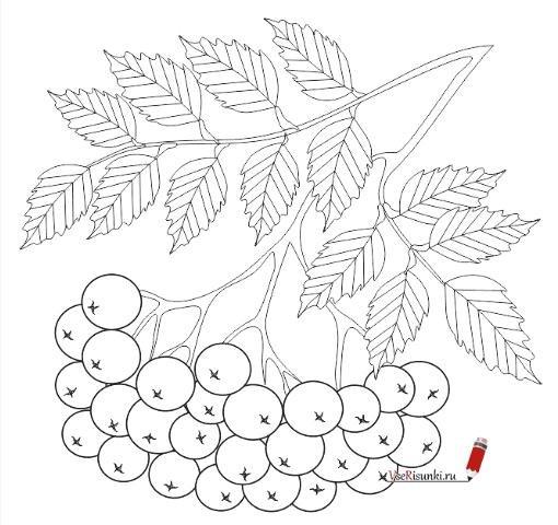 Раскраски рябина - 5