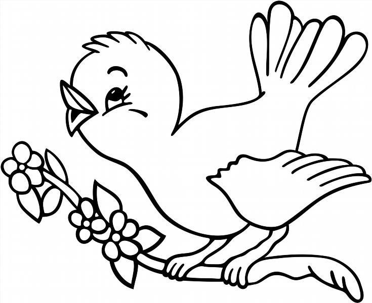 Раскраски птиц и попугаев в