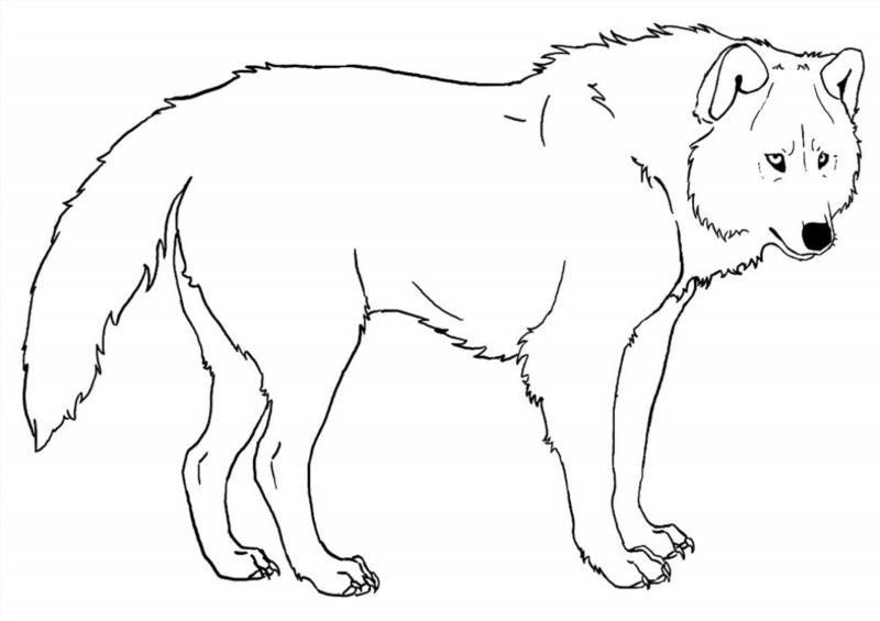 Картинка волка для детей раскраски