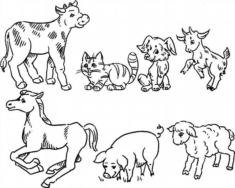 животные раскраска фото домашние