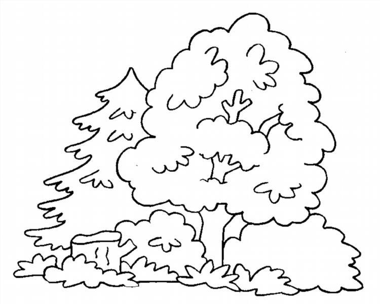 Рисунок для раскраски лес