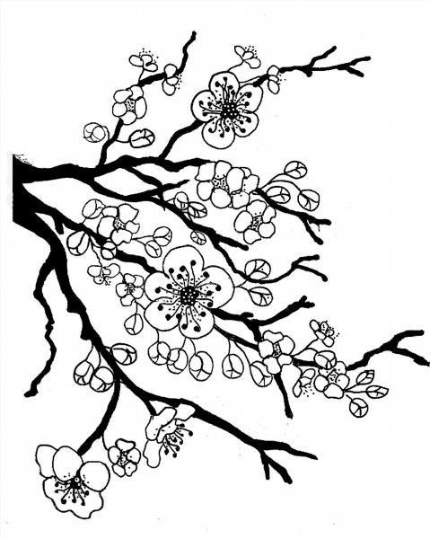 Картинка раскраска сакура