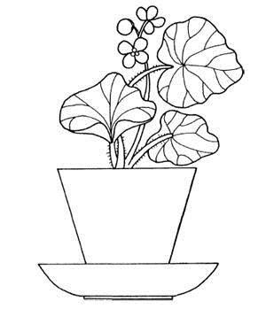 Раскраски о комнатных растениях