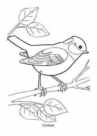 """Раскраски """"зимующие птицы"""" скачать и распечатать бесплатно"""