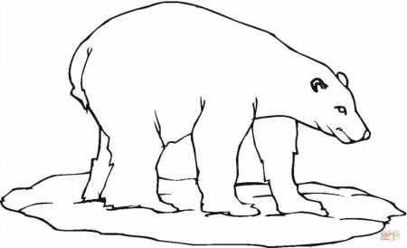 раскраски белый медведь на льдине скачать и распечатать