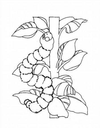 Раскраски цветочек распечатать