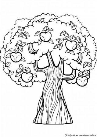 """Раскраски """"дерево с яблоками"""" скачать и распечатать бесплатно"""