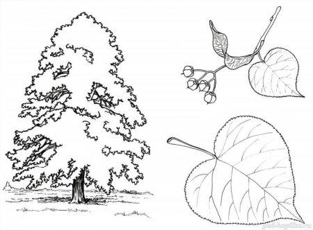 Деревья зимой картинки для детей