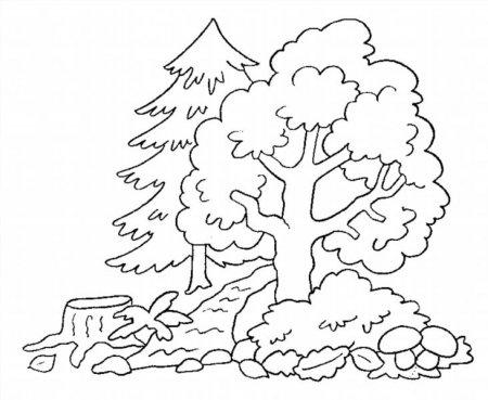 Раскраски леса для детей распечатать