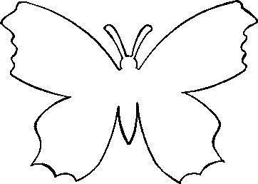 Фото метелики 8