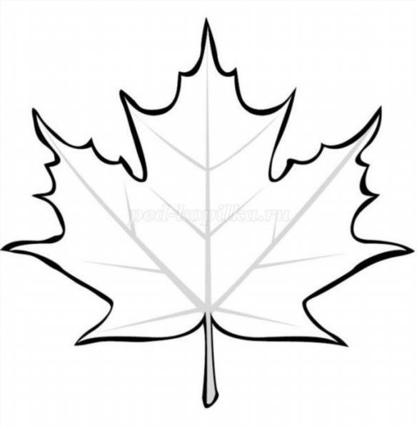 Листья клёна раскраски картинки
