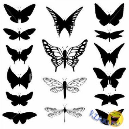 Картинки бабочки на руке